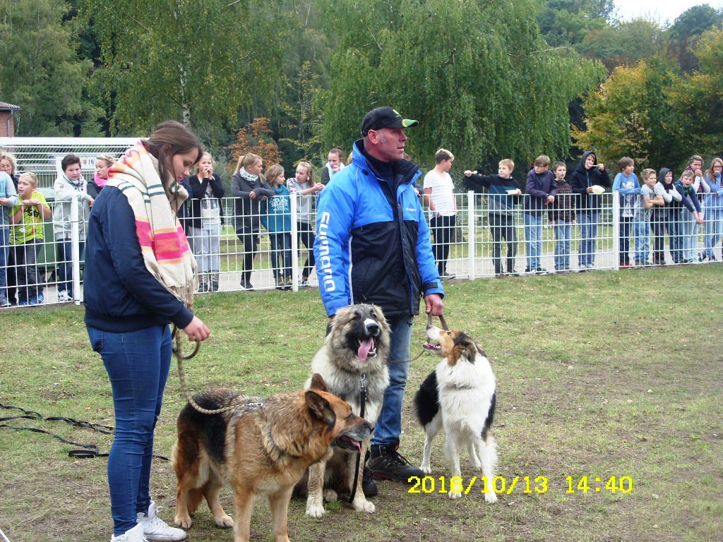 Hundestaffel 2